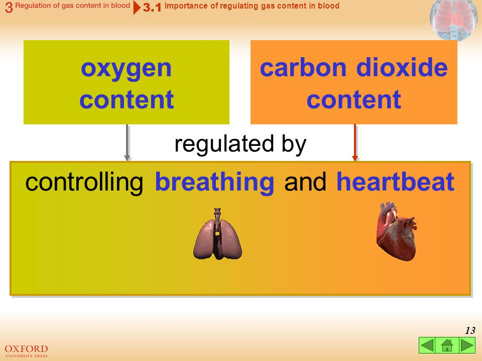 12 3.1 Importance of regulating gas content in blood carbon dioxide content oxygen content how fast the gases are exchanged in the air sacs how fast b