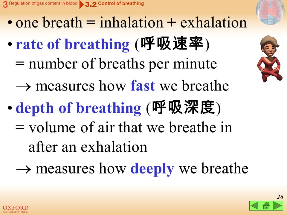 25 3.2 Control of breathing respiratory centre inhalationexhalation stretch receptors stimulated neurones stimulated neurones inhibited stretch recept
