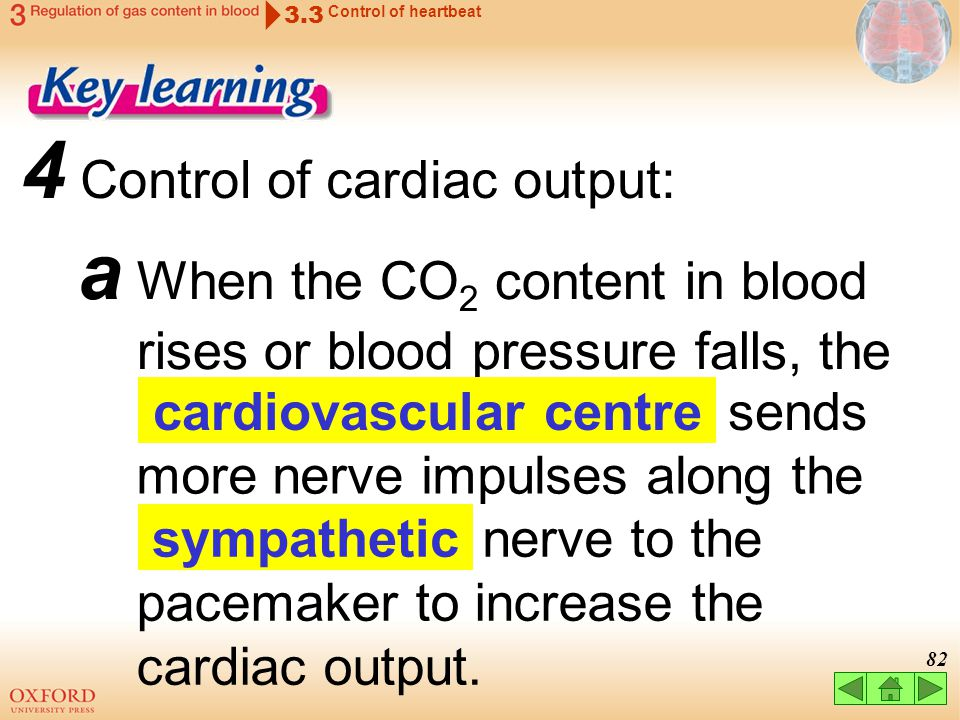 81 c is the volume of blood pumped by each ventricle per minute. 3 Cardiac output 3.3 Control of heartbeat = cardiac output (mL/min) stroke volume (mL
