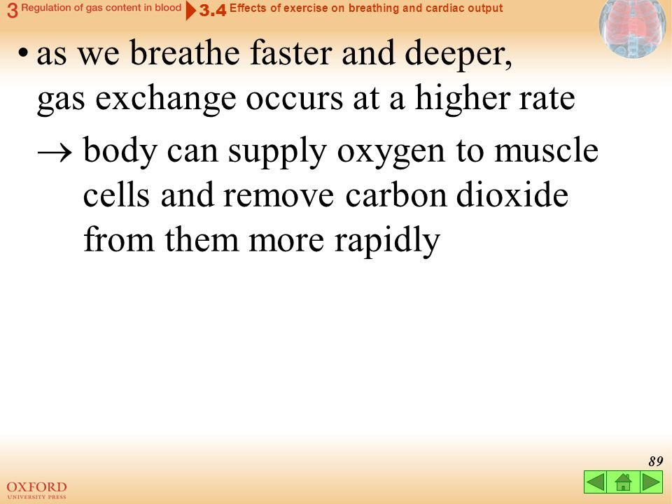88 3.4 Effects of exercise on breathing and cardiac output as we breathe faster and deeper, gas exchange occurs at a higher rate blood flow CO 2 O2O2