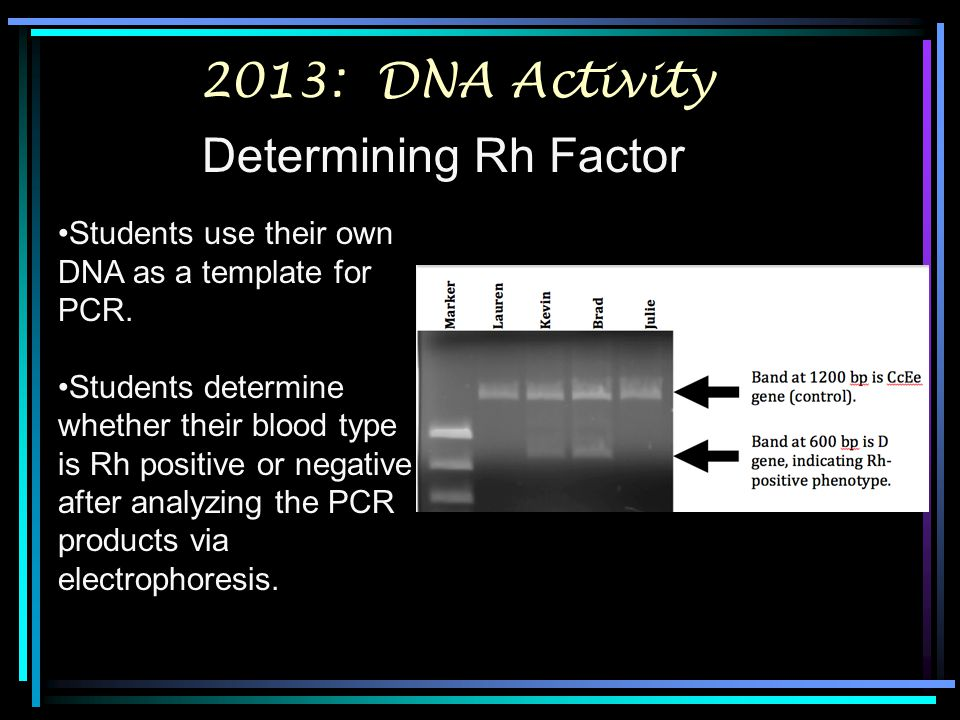2013: DNA Activity Determining Rh Factor Students use their own DNA as a template for PCR. Students determine whether their blood type is Rh positive