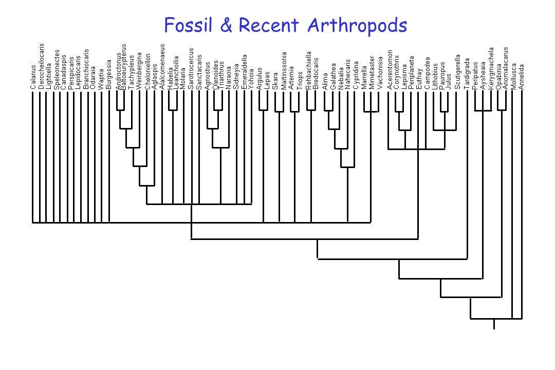 Fossil & Recent Arthropods