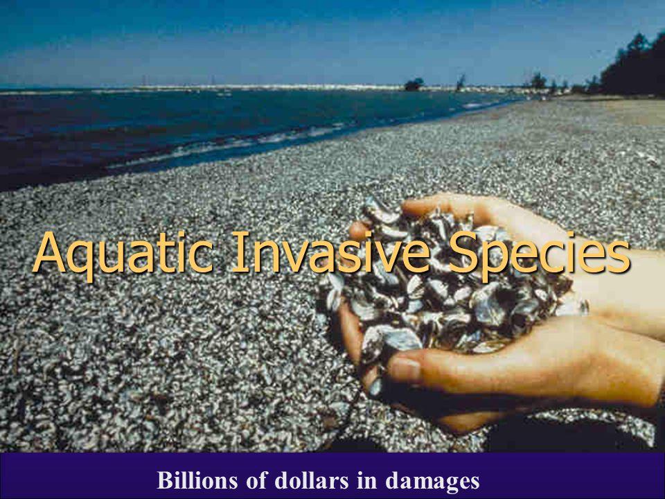 Aquatic Invasive Species Billions of dollars in damages