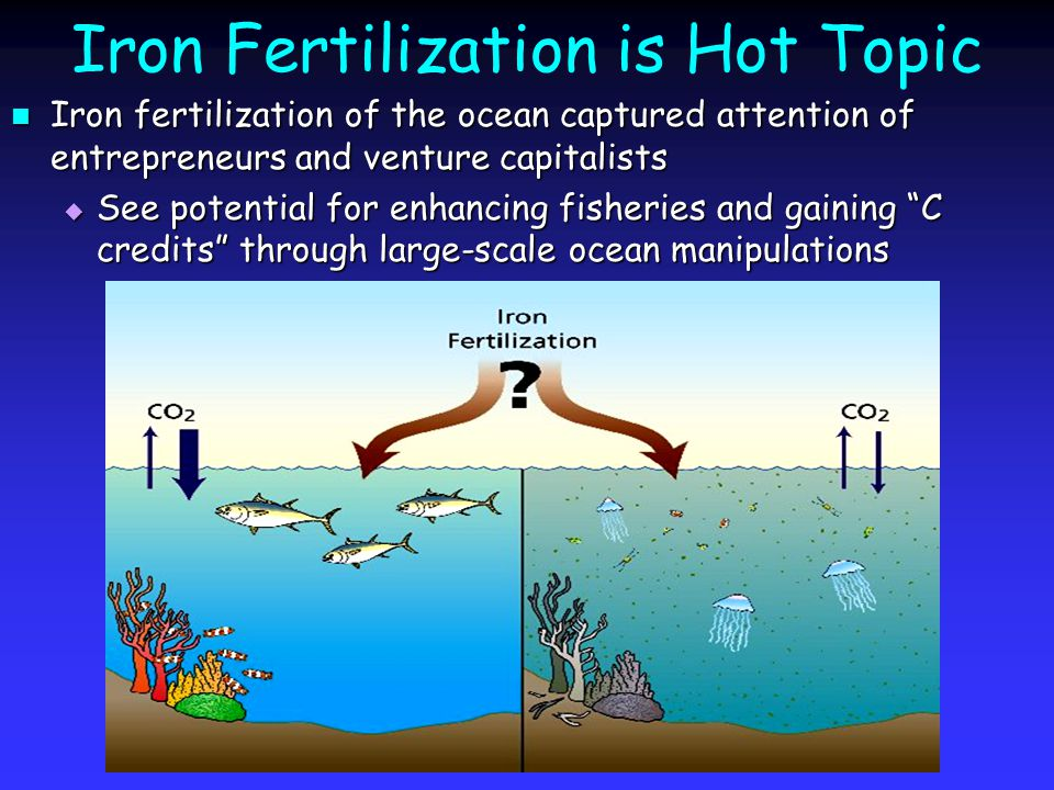 Iron Fertilization is Hot Topic Iron fertilization of the ocean captured attention of entrepreneurs and venture capitalists Iron fertilization of the ocean captured attention of entrepreneurs and venture capitalists  See potential for enhancing fisheries and gaining C credits through large-scale ocean manipulations