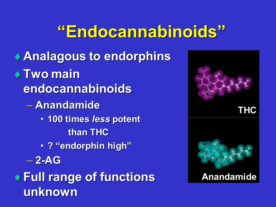 Endocannabinoids  Analagous to endorphins  Two main endocannabinoids –Anandamide 100 times less potent100 times less potent than THC .