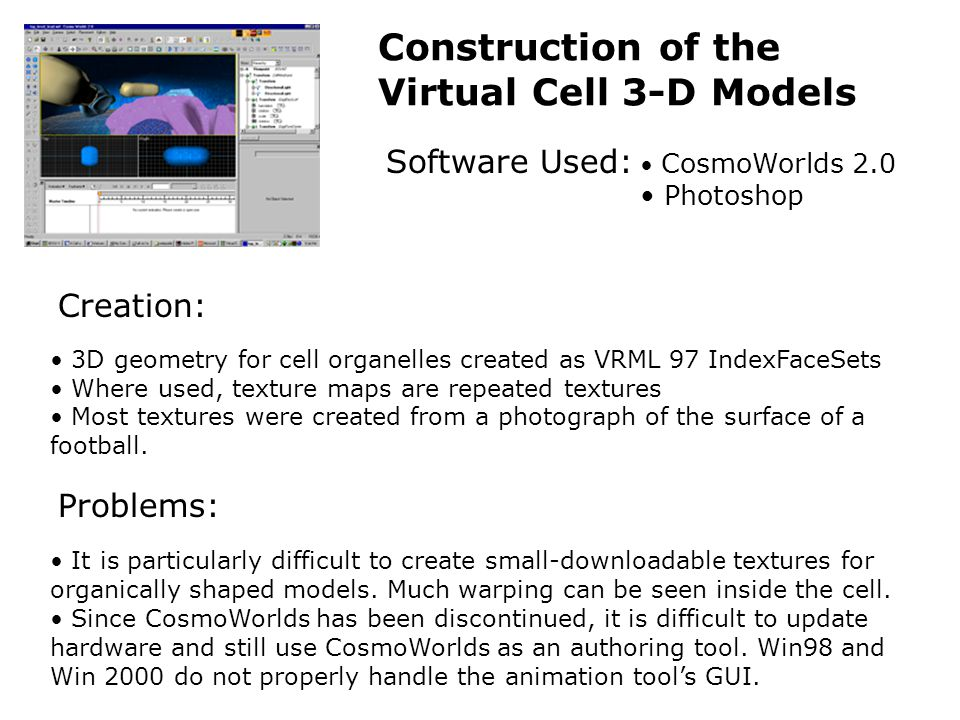 Construction of the Virtual Cell 3-D Models Software Used: CosmoWorlds 2.0 Photoshop 3D geometry for cell organelles created as VRML 97 IndexFaceSets Where used, texture maps are repeated textures Most textures were created from a photograph of the surface of a football.