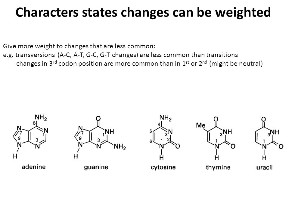 Characters states changes can be weighted Give more weight to changes that are less common: e.g.