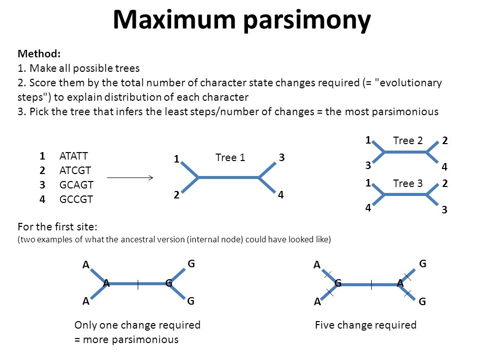 Maximum parsimony Method: 1.Make all possible trees 2.