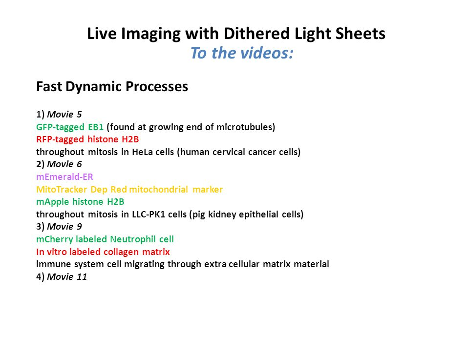 To the videos: Live Imaging with Dithered Light Sheets Fast Dynamic Processes 1) Movie 5 GFP-tagged EB1 (found at growing end of microtubules) RFP-tagged histone H2B throughout mitosis in HeLa cells (human cervical cancer cells) 2) Movie 6 mEmerald-ER MitoTracker Dep Red mitochondrial marker mApple histone H2B throughout mitosis in LLC-PK1 cells (pig kidney epithelial cells) 3) Movie 9 mCherry labeled Neutrophil cell In vitro labeled collagen matrix immune system cell migrating through extra cellular matrix material 4) Movie 11