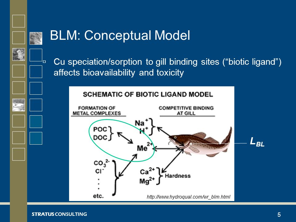 STRATUS CONSULTING BLM: Conceptual Model (cont.)  BLM: predict concentration of dissolved Cu that would cause toxicity to aquatic biota over a range of water quality conditions –BLM uses lethal accumulation on gill to estimate toxicity  Three elements of model –Geochemical speciation code CHESS (Santore and Driscoll, 1995) Calculates inorganic metal speciation –WHAM V model (Tipping, 1994) Calculates degree of metal-organic interaction –Biotic ligand (e.g., fish gill) binding constant (Di Toro et al., 2001) 6 Geochemical Speciation Metal-organic Interactions Binding to fish gill