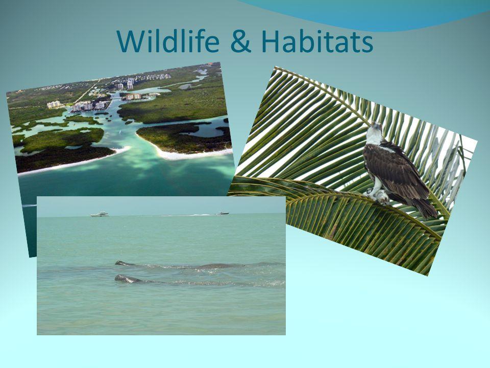 Wildlife & Habitats