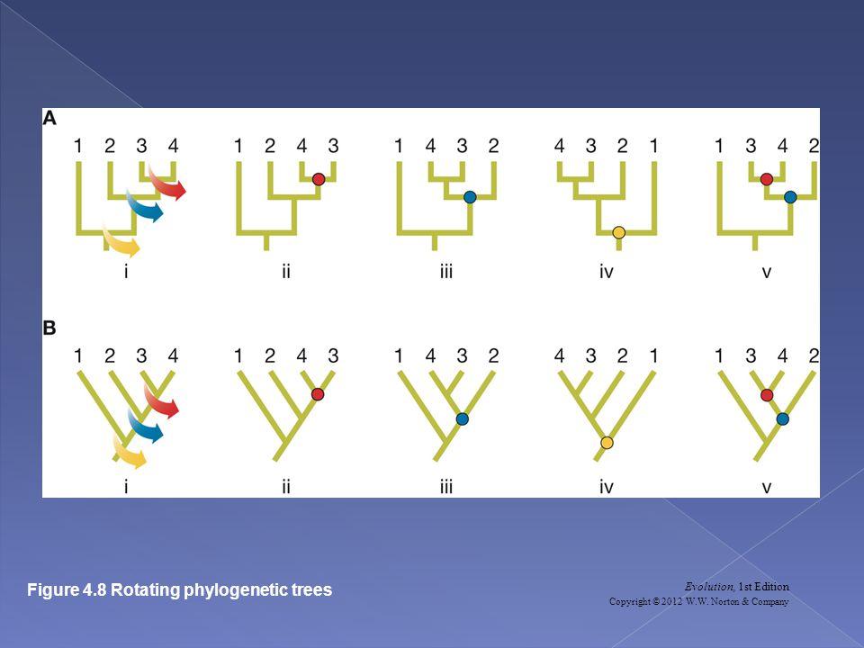 Evolution, 1st Edition Copyright © 2012 W.W. Norton & Company Figure 4.8 Rotating phylogenetic trees