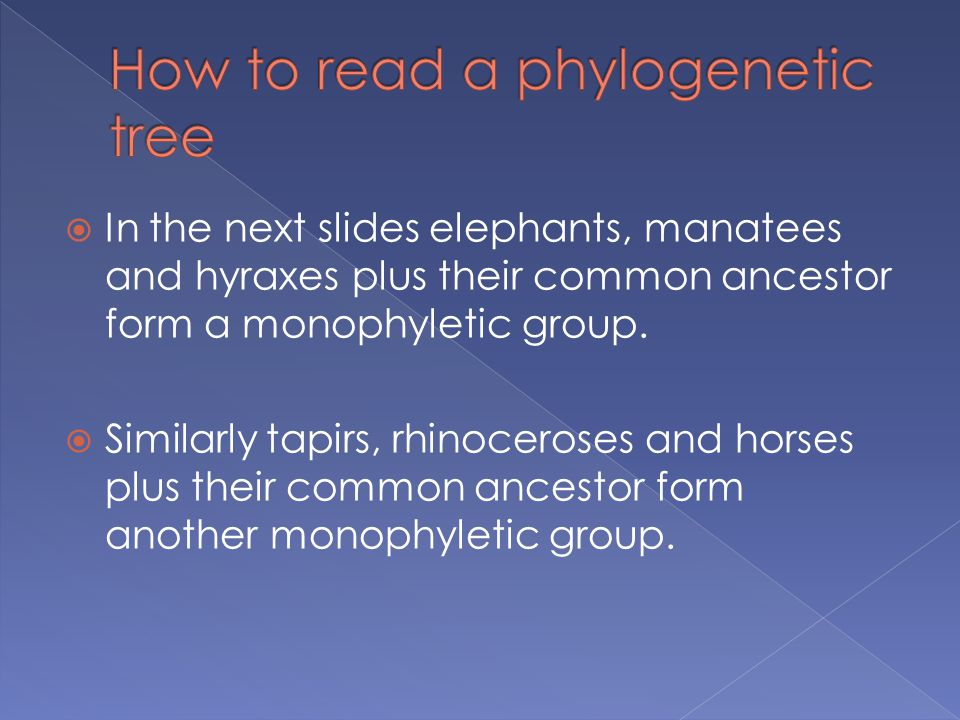  In the next slides elephants, manatees and hyraxes plus their common ancestor form a monophyletic group.