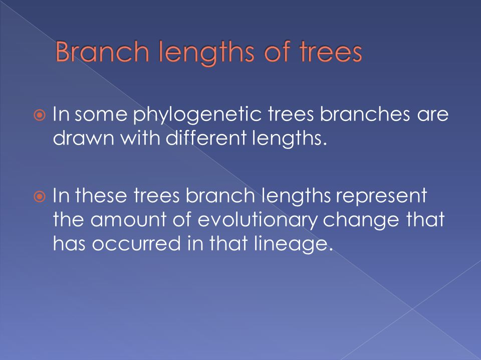  In some phylogenetic trees branches are drawn with different lengths.