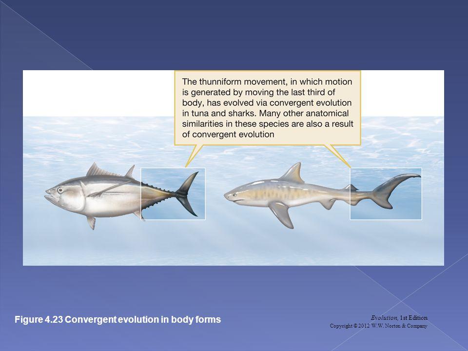 Evolution, 1st Edition Copyright © 2012 W.W. Norton & Company Figure 4.23 Convergent evolution in body forms