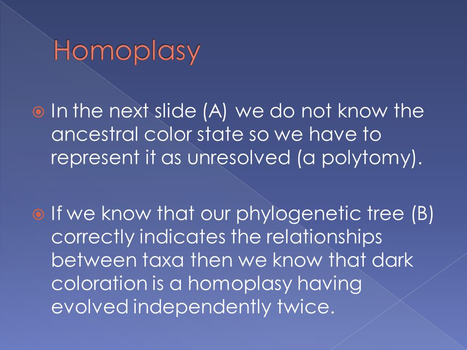  In the next slide (A) we do not know the ancestral color state so we have to represent it as unresolved (a polytomy).