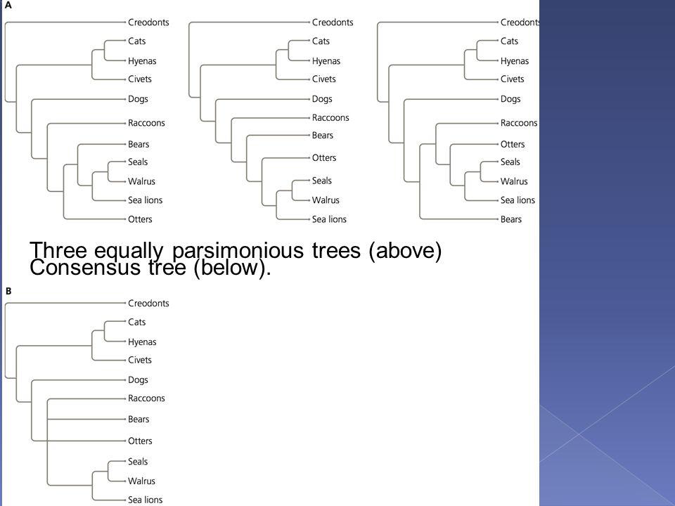 Three equally parsimonious trees (above) Consensus tree (below).