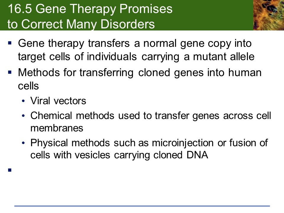 16.5 Gene Therapy Promises to Correct Many Disorders  Gene therapy transfers a normal gene copy into target cells of individuals carrying a mutant al