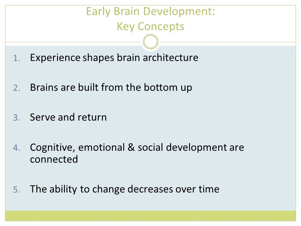 Early Brain Development: Key Concepts 1. Experience shapes brain architecture 2. Brains are built from the bottom up 3. Serve and return 4. Cognitive,