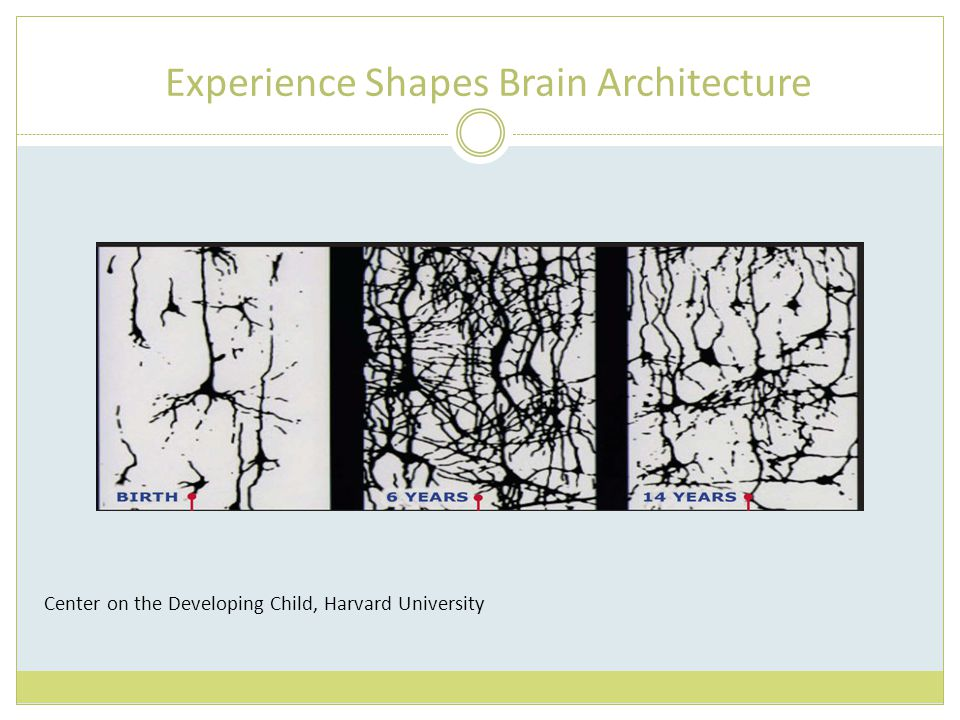 Experience Shapes Brain Architecture Center on the Developing Child, Harvard University