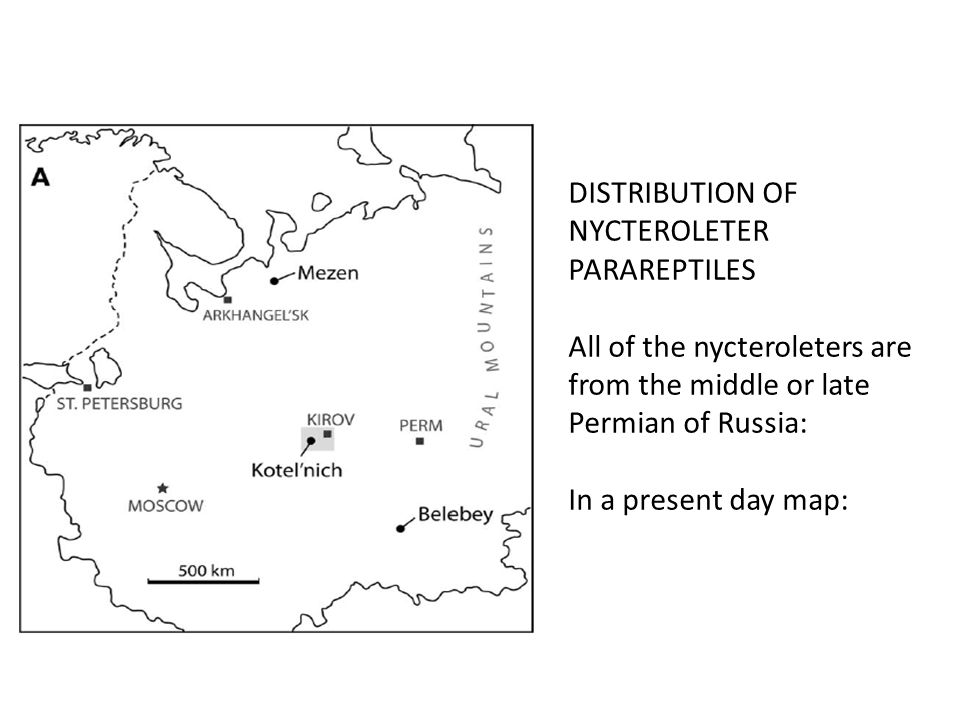 DISTRIBUTION OF NYCTEROLETER PARAREPTILES All of the nycteroleters are from the middle or late Permian of Russia: In a present day map: