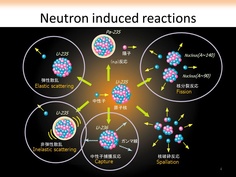 Neutron induced reactions U-235 U-236 U-235 Pa-235 Nucleus (A~90) Nucleus (A~140) Fission Spallation Capture Elastic scattering Inelastic scattering 4