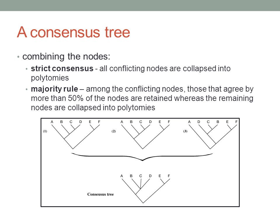 A consensus tree combining the nodes: strict consensus - all conflicting nodes are collapsed into polytomies majority rule – among the conflicting nod