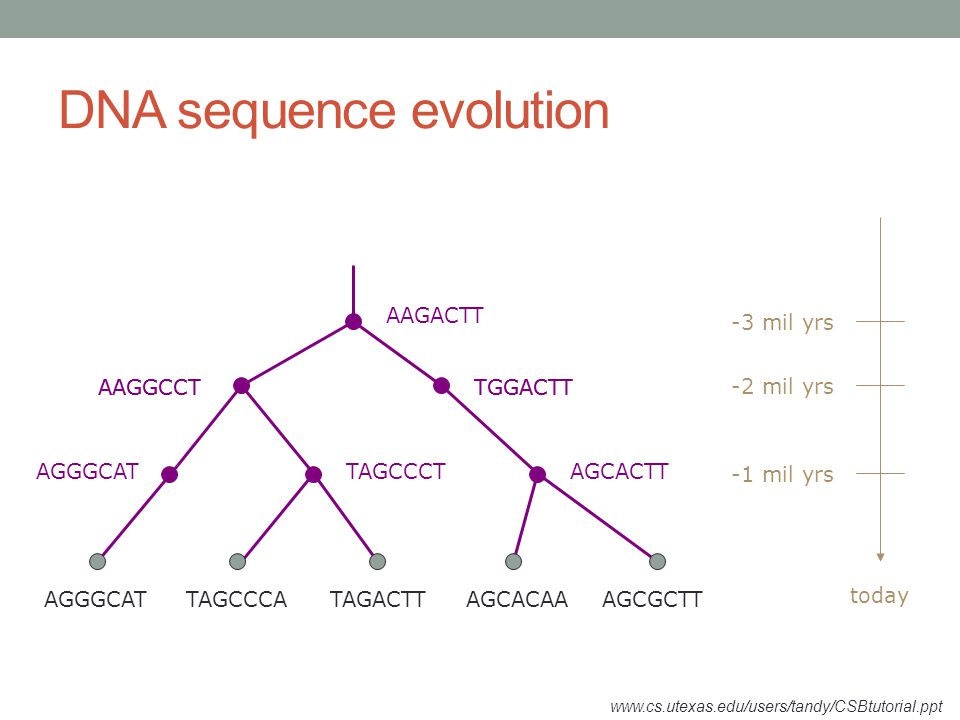 Tree building methods Two major categories.Distance based methods.
