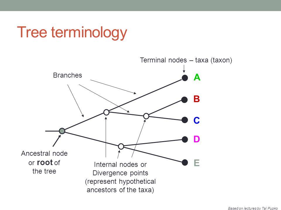 Tree building methods COMPUTATIONAL METHOD Clustering algorithmOptimality criterion DATA TYPE Characters Distances Maximum parsimony (MP) Maximum likelihood (ML) UPGMA Neighbor-joining (NJ) Fitch-Margoliash (FM)