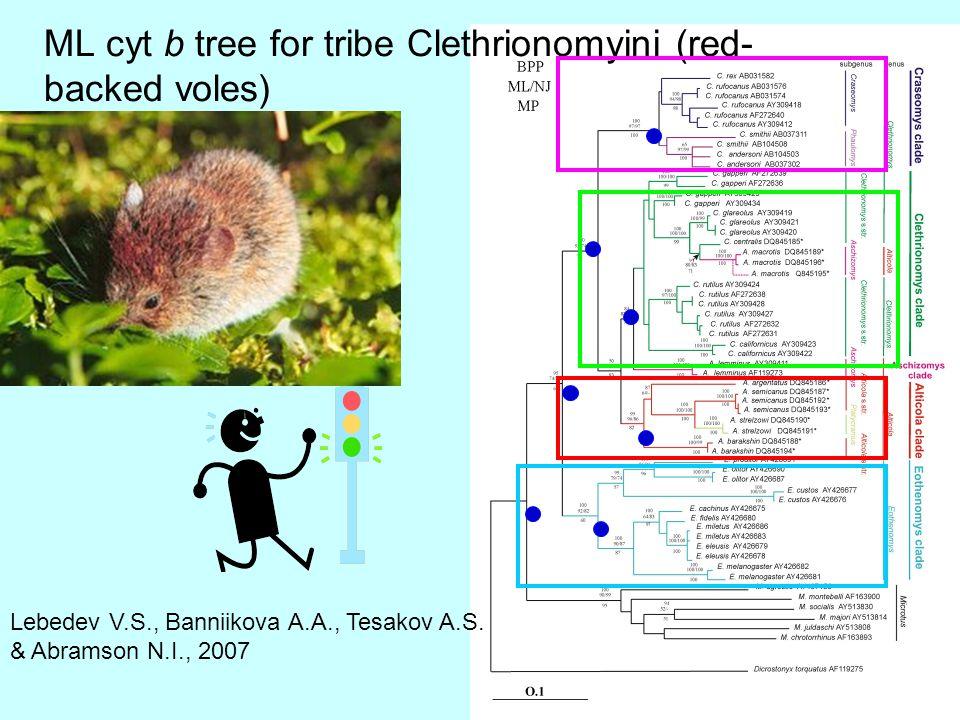 ML cyt b tree for tribe Clethrionomyini (red- backed voles) Lebedev V.S., Banniikova A.A., Tesakov A.S.