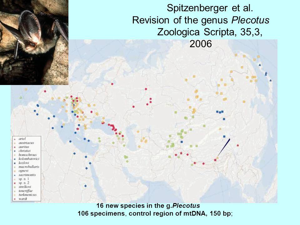 16 new species in the g.Plecotus 106 specimens, control region of mtDNA, 150 bp; Spitzenberger et al.