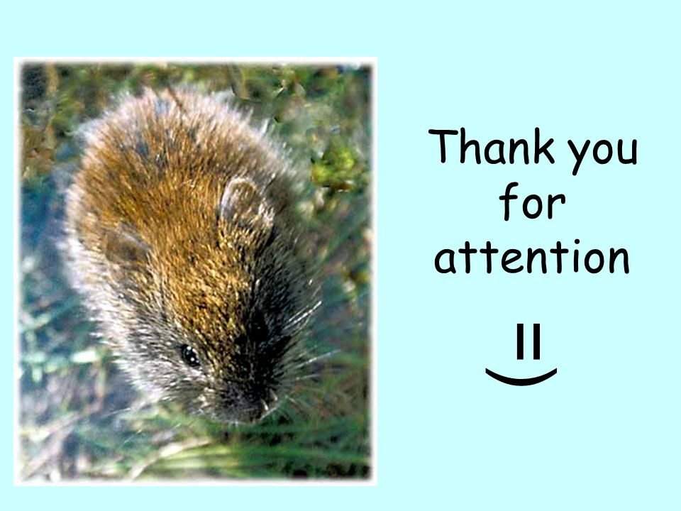 Thank you for attention =)