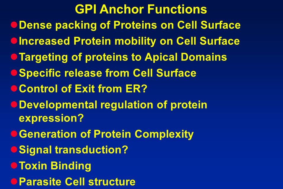 GPI Anchor Functions Dense packing of Proteins on Cell Surface Increased Protein mobility on Cell Surface Targeting of proteins to Apical Domains Spec