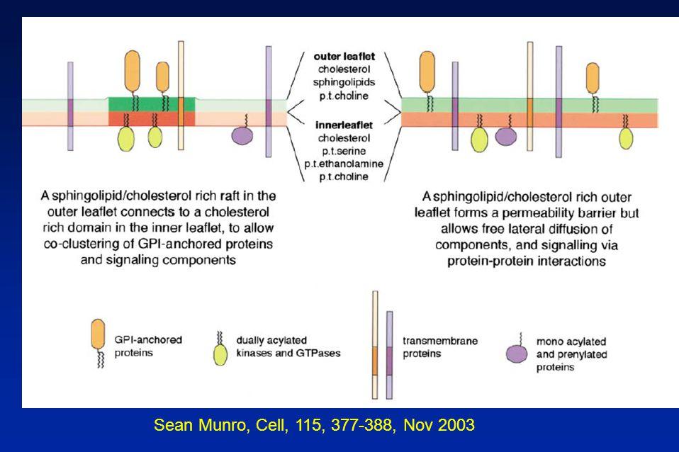 Sean Munro, Cell, 115, 377-388, Nov 2003