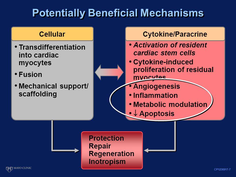 Protection Repair Regeneration Inotropism Cellular Transdifferentiation into cardiac myocytes Fusion Mechanical support/ scaffolding Potentially Beneficial Mechanisms Cytokine/Paracrine Activation of resident cardiac stem cells Cytokine-induced proliferation of residual myocytes Angiogenesis Inflammation Metabolic modulation  Apoptosis CP1236917-7