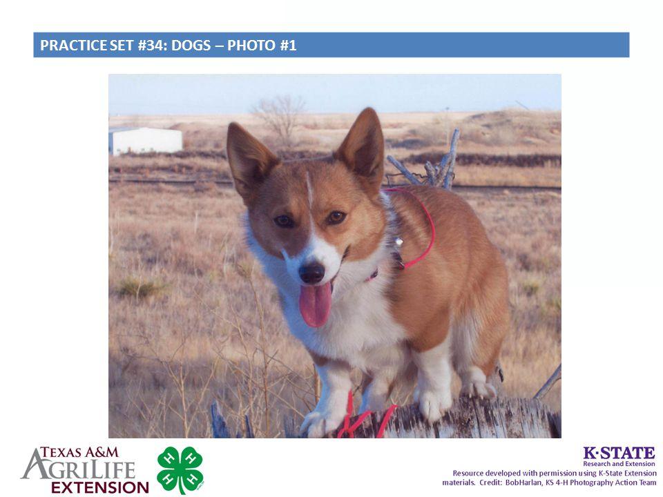 PRACTICE SET #34: DOGS – PHOTO #1
