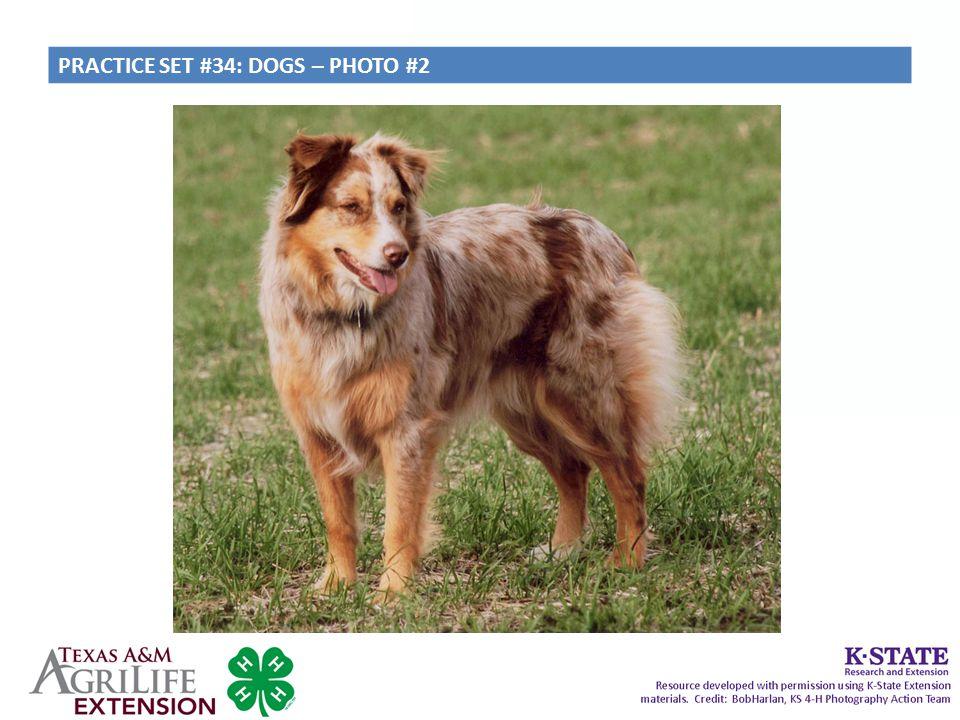 PRACTICE SET #34: DOGS – PHOTO #2