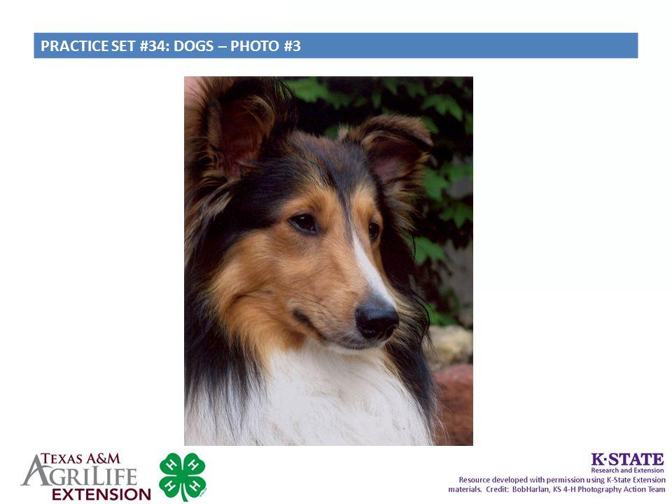 PRACTICE SET #34: DOGS – PHOTO #3
