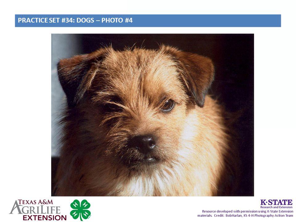 PRACTICE SET #34: DOGS – PHOTO #4