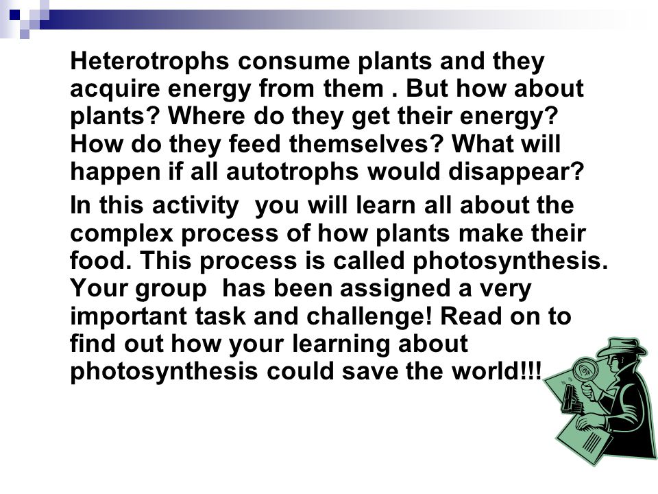 Heterotrophs consume plants and they acquire energy from them.
