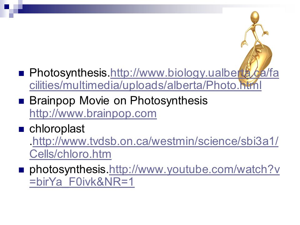 2.Now you should have a better understanding about photosynthesis.
