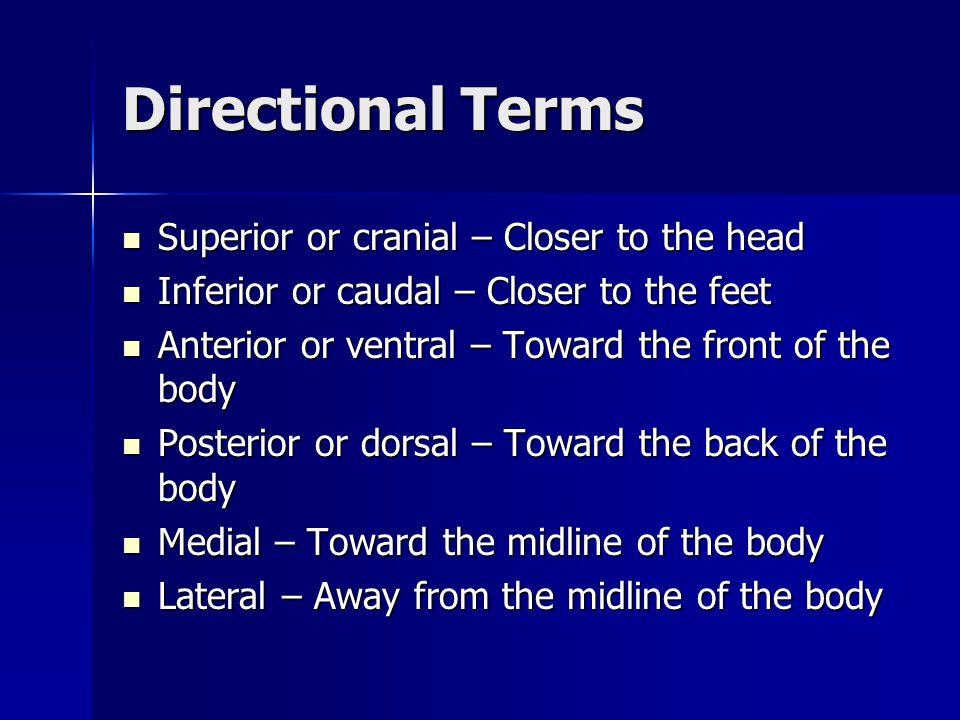 Directional Terms Superior or cranial – Closer to the head Superior or cranial – Closer to the head Inferior or caudal – Closer to the feet Inferior o