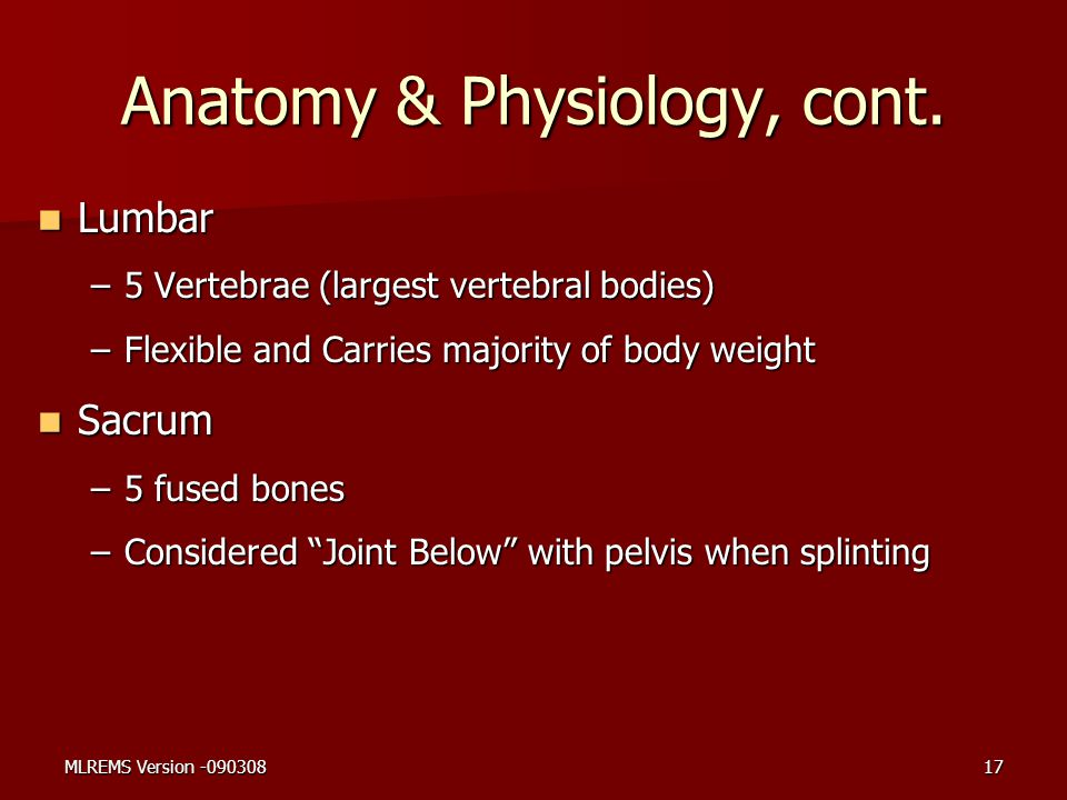 Anatomy & Physiology, cont. Lumbar Lumbar –5 Vertebrae (largest vertebral bodies) –Flexible and Carries majority of body weight Sacrum Sacrum –5 fused
