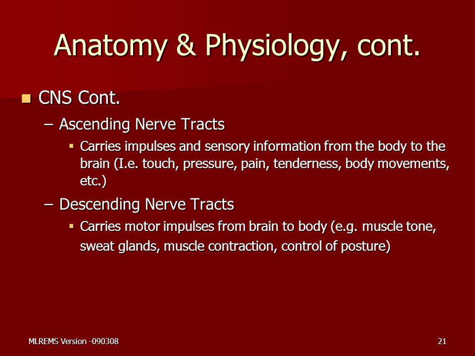 Anatomy & Physiology, cont. CNS Cont. CNS Cont. –Ascending Nerve Tracts  Carries impulses and sensory information from the body to the brain (I.e. to