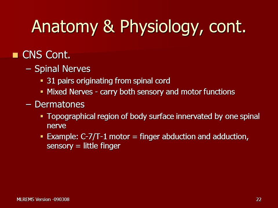 Anatomy & Physiology, cont. CNS Cont. CNS Cont. –Spinal Nerves  31 pairs originating from spinal cord  Mixed Nerves - carry both sensory and motor f