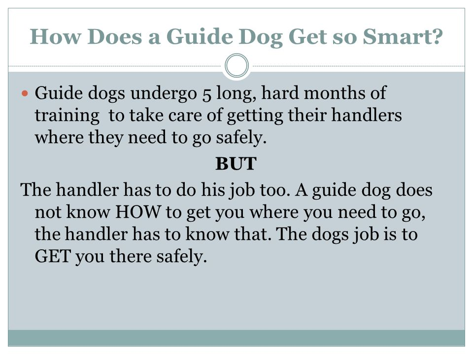 How Does a Guide Dog Get so Smart.
