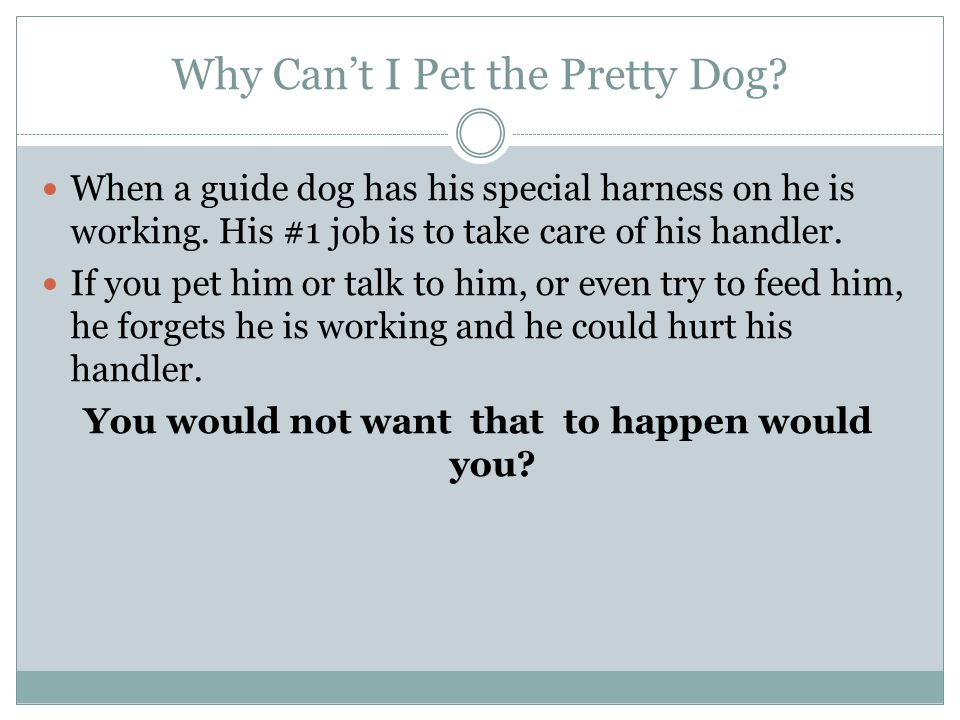 Why Can't I Pet the Pretty Dog. When a guide dog has his special harness on he is working.