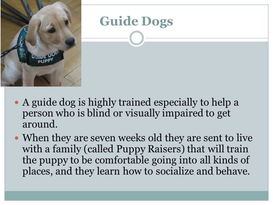 Guide Dogs A guide dog is highly trained especially to help a person who is blind or visually impaired to get around.