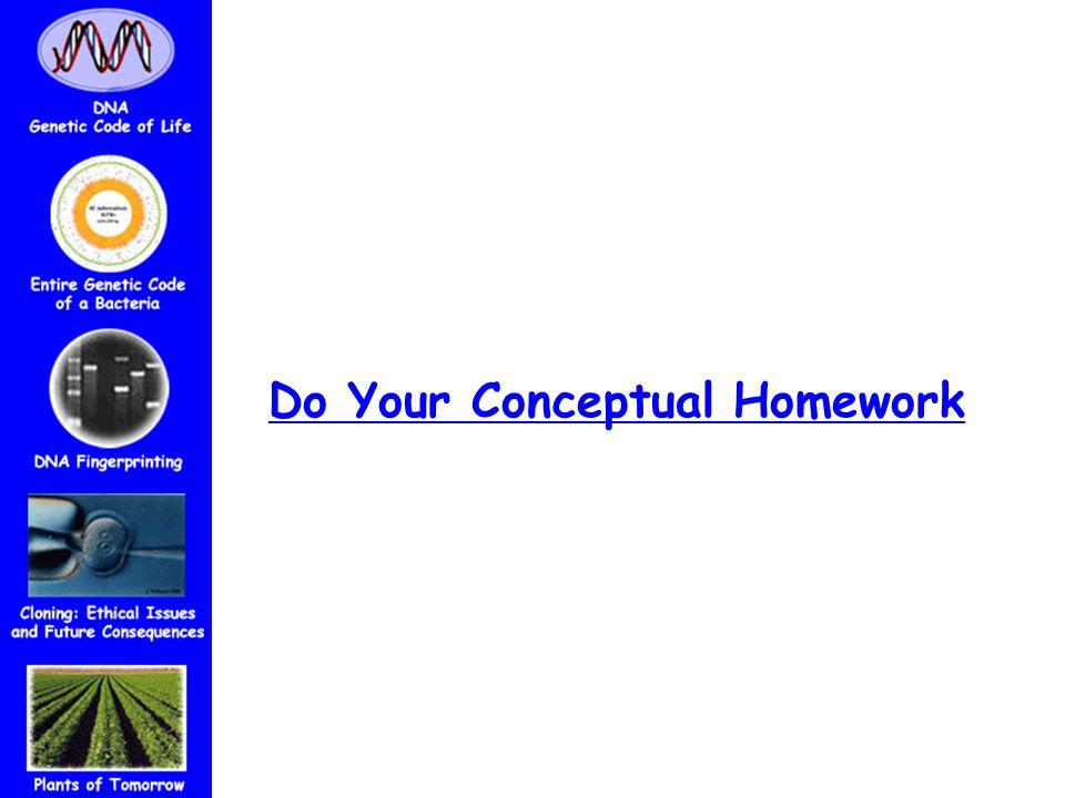 Do Your Conceptual Homework