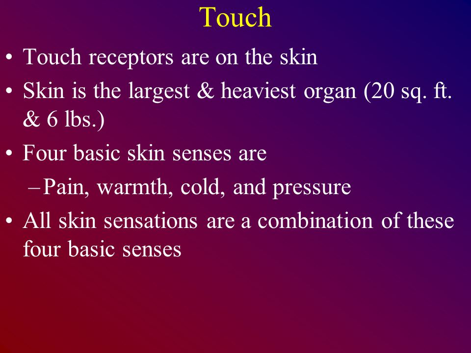 Touch Touch receptors are on the skin Skin is the largest & heaviest organ (20 sq. ft. & 6 lbs.) Four basic skin senses are –Pain, warmth, cold, and p